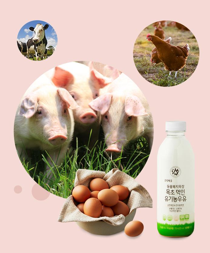 윤리적 밥상을 실현하는 가치 소비, 동물복지